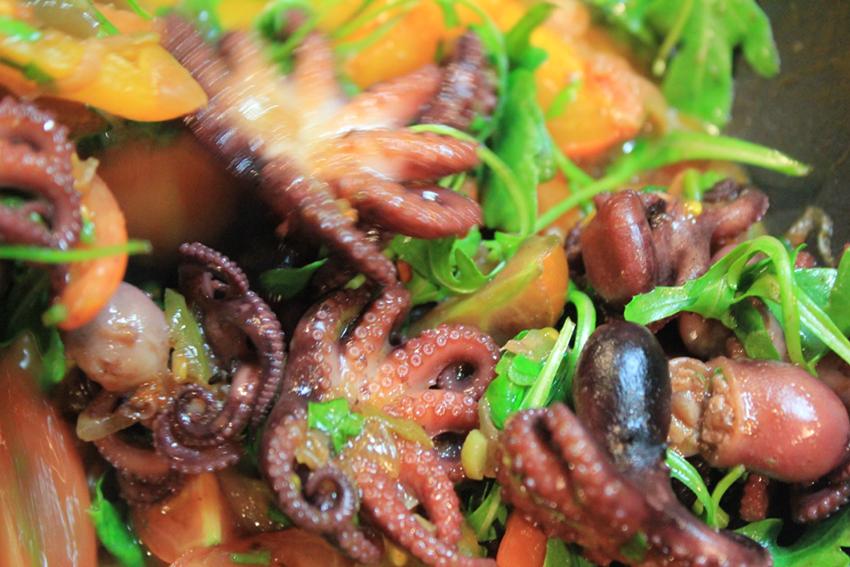 baby-octopus-6